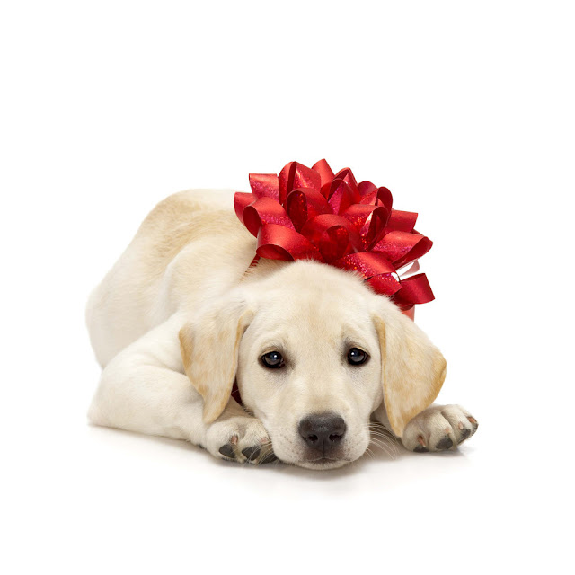 Christmas dogs iPad wallpapers