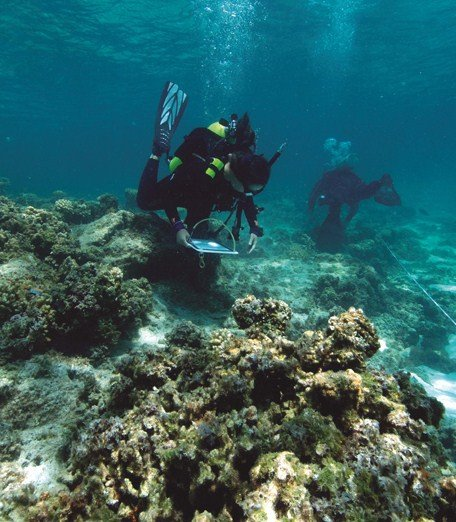 divers study diseased coral