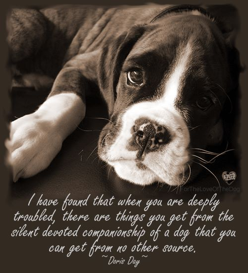 Stories etc best dog quotes for Best dogs for companionship
