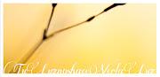 Feliz Pascua 2013. Tus heridas nos han curado. Tu Luz nos hace ver la Luz. flor