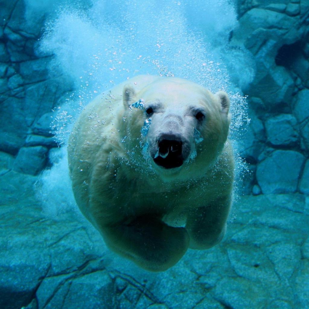 http://4.bp.blogspot.com/-8kNTPUlMUsw/UOmy9N3-aoI/AAAAAAAABkc/h-QEu94--Tk/s1600/diving-bear.jpg