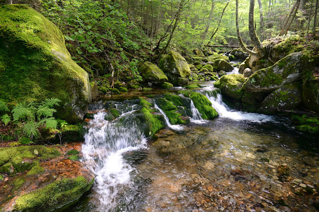 cascades along Castle Brook in the White Mountains