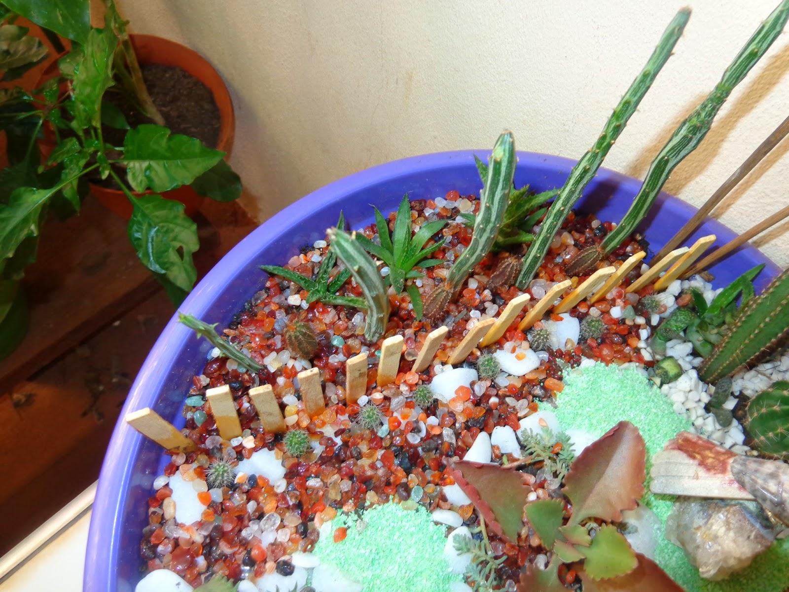 artesanato mini jardim:Esses cactozinhos são bebês que plantei de semente. Quando crescerem