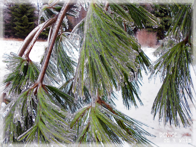Winter Ice Storms via http://deniseonawhim.blogspot.com