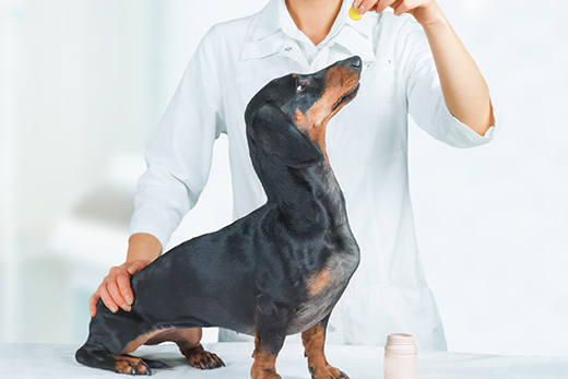Is Griseofulvin Safe For Dogs