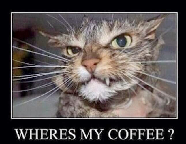 Kitty Needs His Coffee