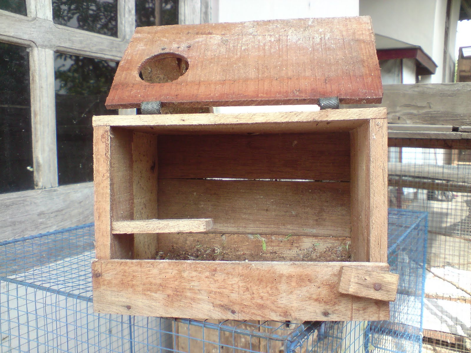 yono bird farm contoh glodok rumah parkit yang ideal