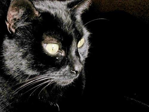 gato negro y Halloween