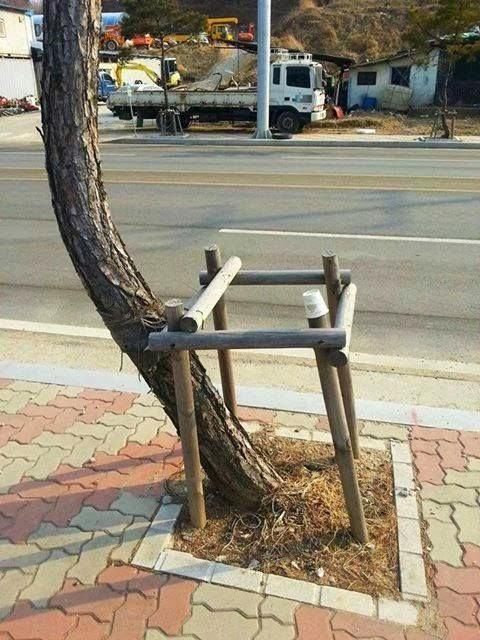 albero ribelle