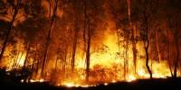 1,17 Juta hektar Hutan Indonesia hilang per tahun