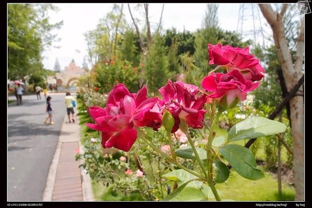 雲林古坑-耐斯集團-羅莎玫瑰莊園