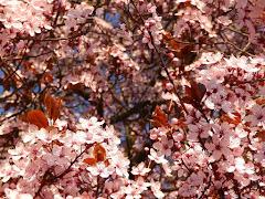 Pachnie wiosną