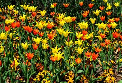 Atlanta Blooms! Atlanta Botanical Garden