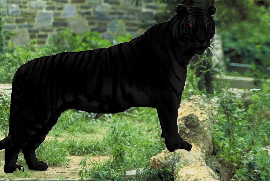 Computer-generated mock-up of the likely morphology of a melanistic    Black Tigers Animal