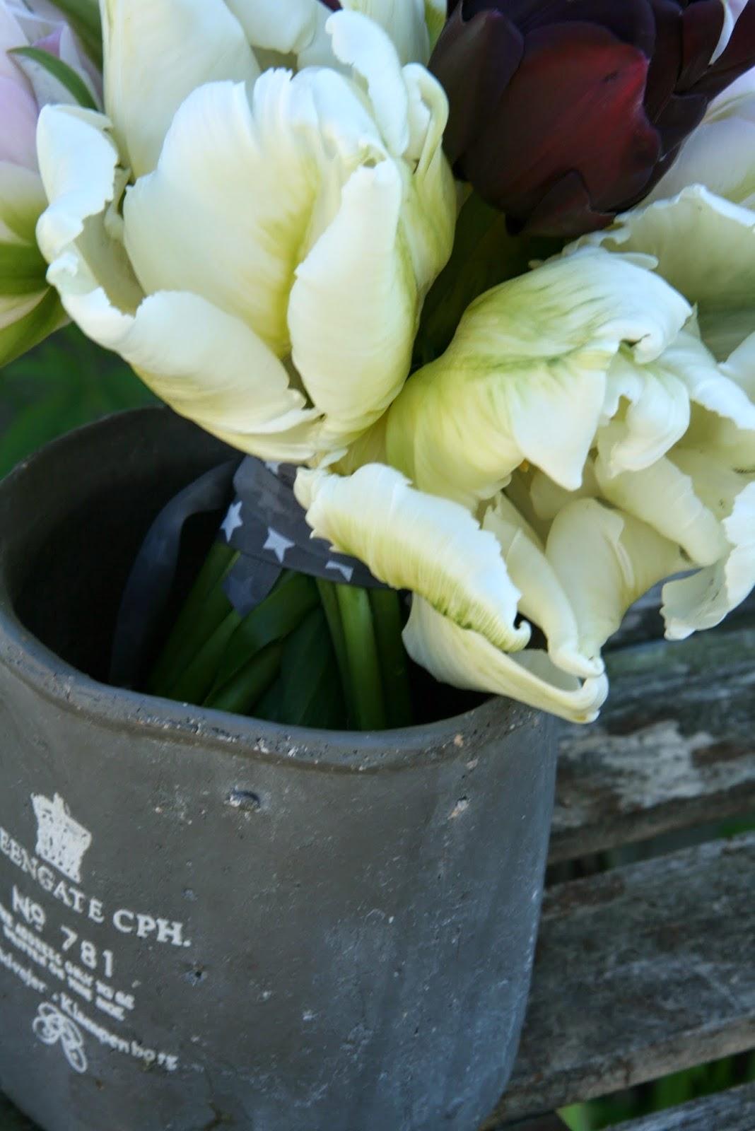 tulipaner høstløk bulbs tulips