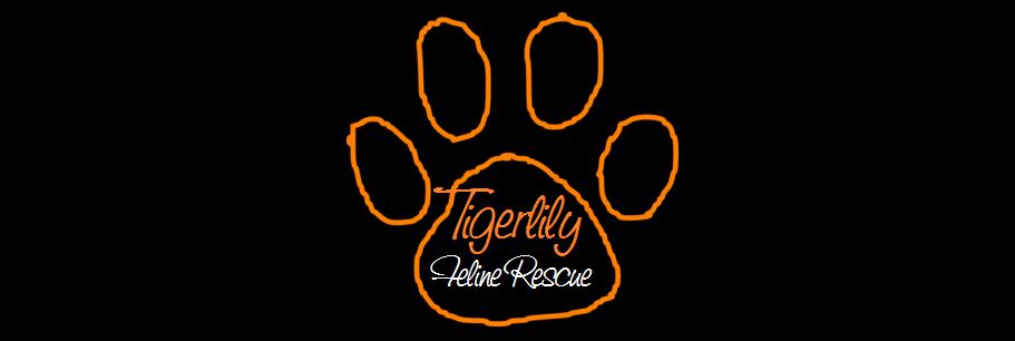 Tigerlily Feline Rescue