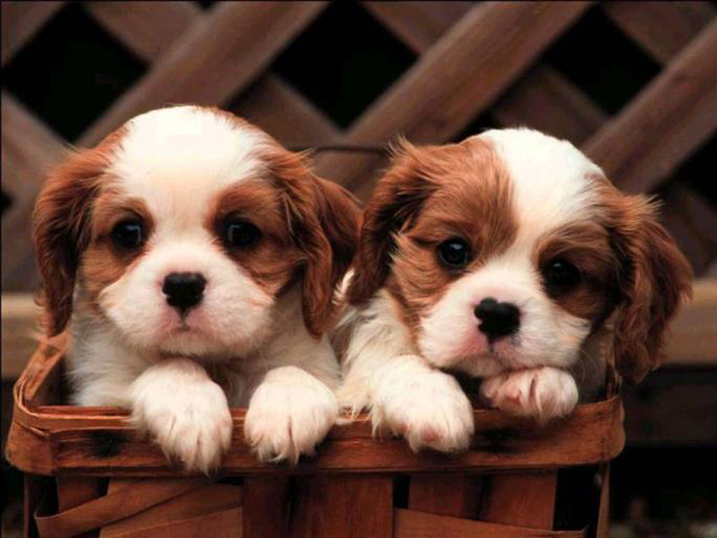 Newer Post Older Post   187  HomeVery Cute Puppies Wallpapers