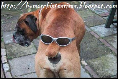 Chistes de Jaimito groseros cortos y graciosos - Buenos
