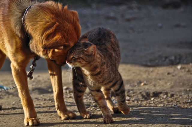 anjing kucing lucu