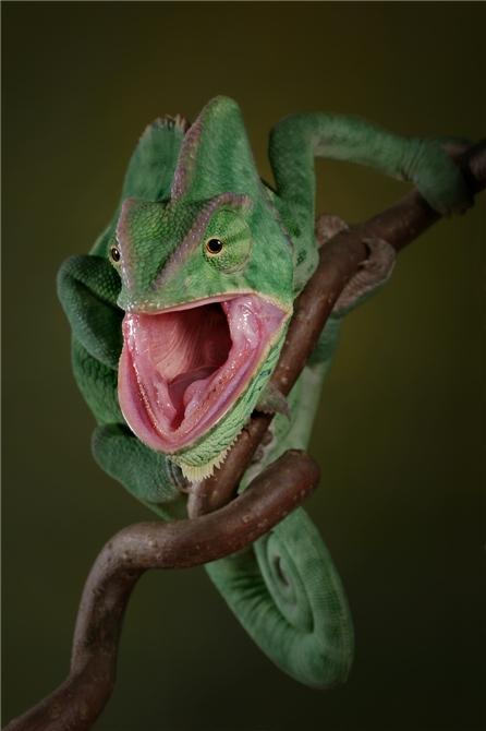 макрофотография, макросъёмка насекомых и пресмыкающихся