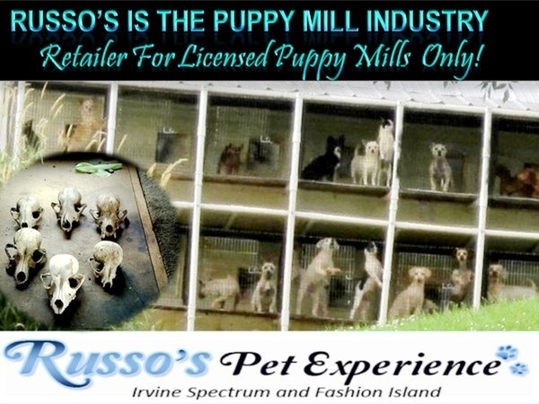 Russo's Pets, Russo's Pet Experience, Russo's Newport Beach, Visitnewportbeach.com