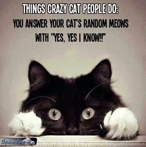 funny cat people humor