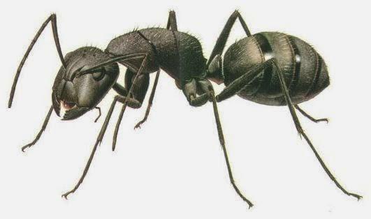 Nabi Sulaiman, Semut, dan  Cacing