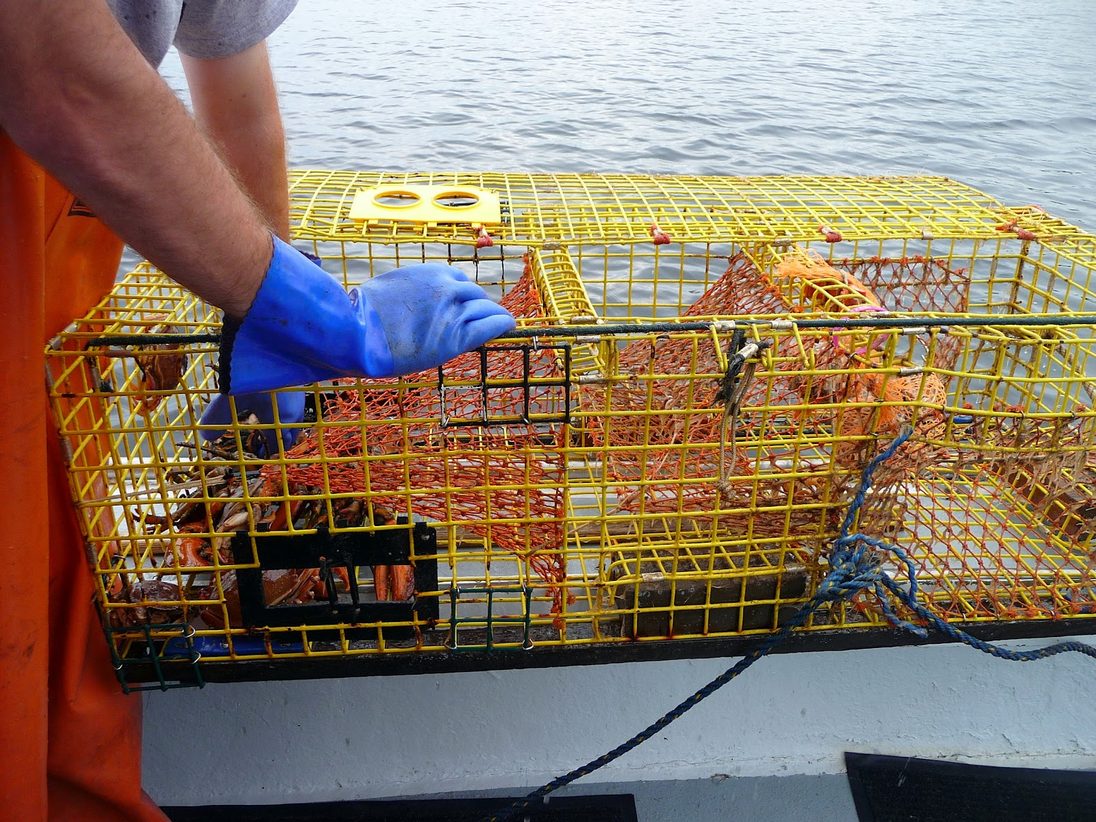 Chef Bolek: A Day in the Life of a Lobster Fisherman