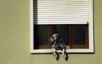 cães de aprtamento
