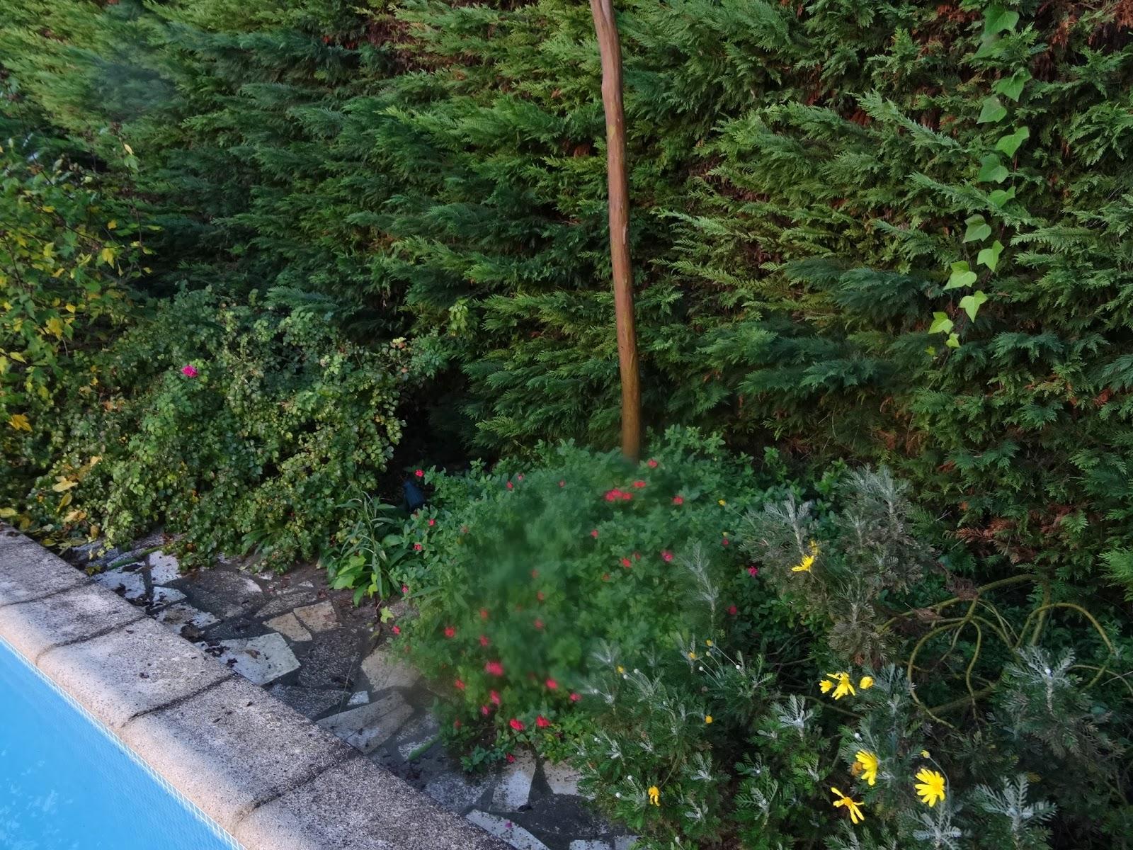 Les aventures burlesques de ciboulette c 39 est un jardin for Jardin extraordinaire 2015 lieurac