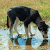 This Dog Died From Drinking Out Of A Puddle. The Reason? I Had No Idea