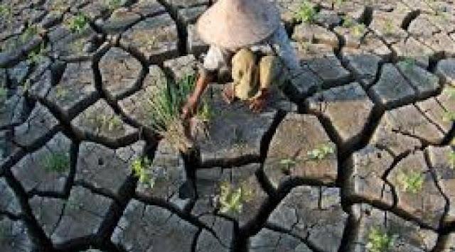 Dampak El Nino, Bima Tanpa Hujan Diperkirakan Hingga November