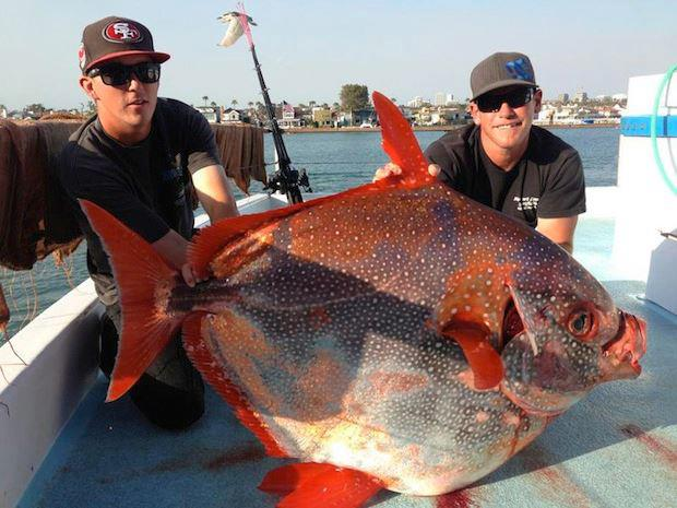 Big fishes of the world opah page 2 for Freshwater fishing in southern california