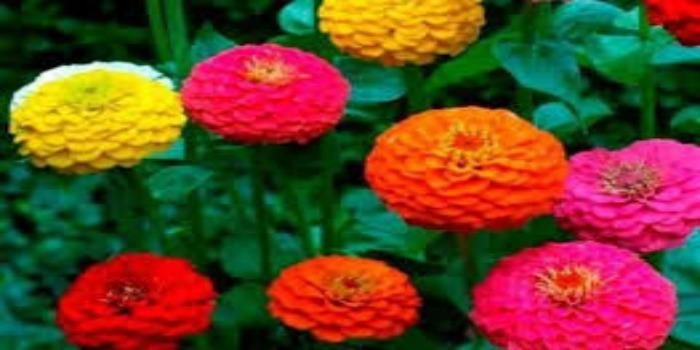 flores para jardim verao : flores para jardim verao:Jardim minha Paixão, para você que é amante das plantas e Flores