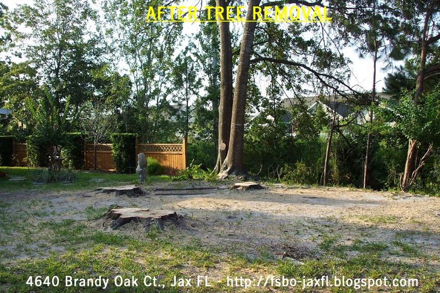 4640 Brandy Oak Court - Water Oak Trees Removed