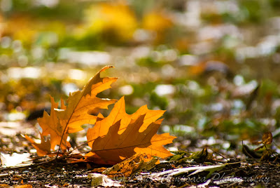 Toamna-Autumn-Herbst-Otoño-Toamna-Φθινόπωρο-Ősz