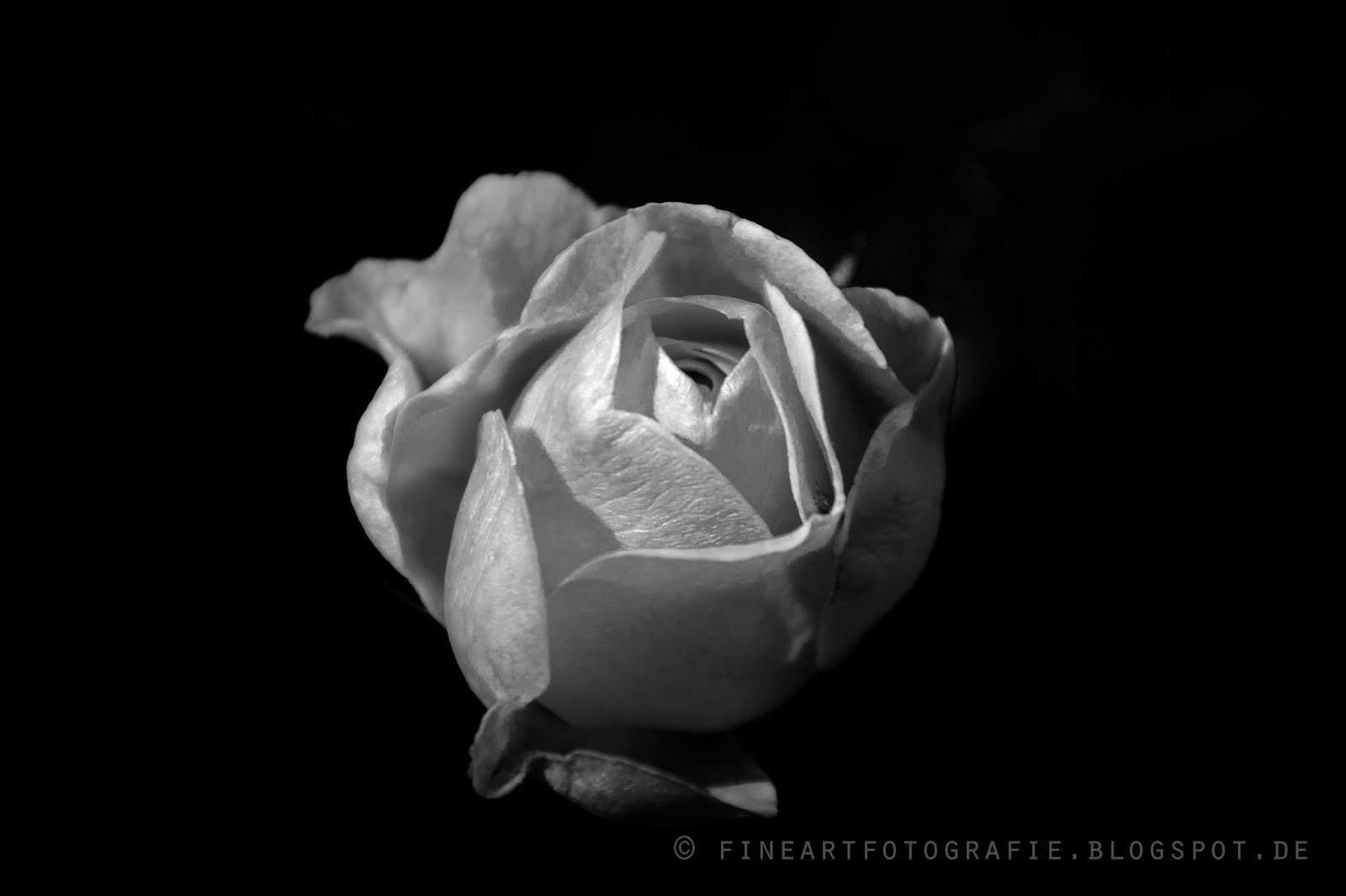 Fine Art Fotografie Blumen Und Pflanzen In Schwarz Weiss