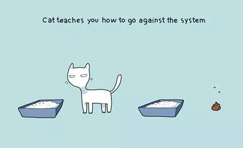 10 Keistimewaan Memelihara Kucing