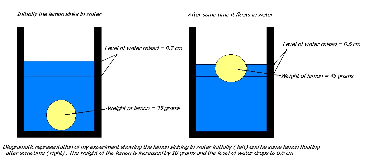 My Experiments And Results Why Does A Lemon Sink In Water
