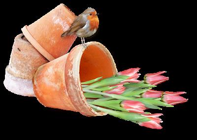 http://4.bp.blogspot.com/-8r0x1vzv03k/VVyC4ngBOCI/AAAAAAAALns/_u6rrfh8iX0/s400/al_SG%2Bpot_tulips.png