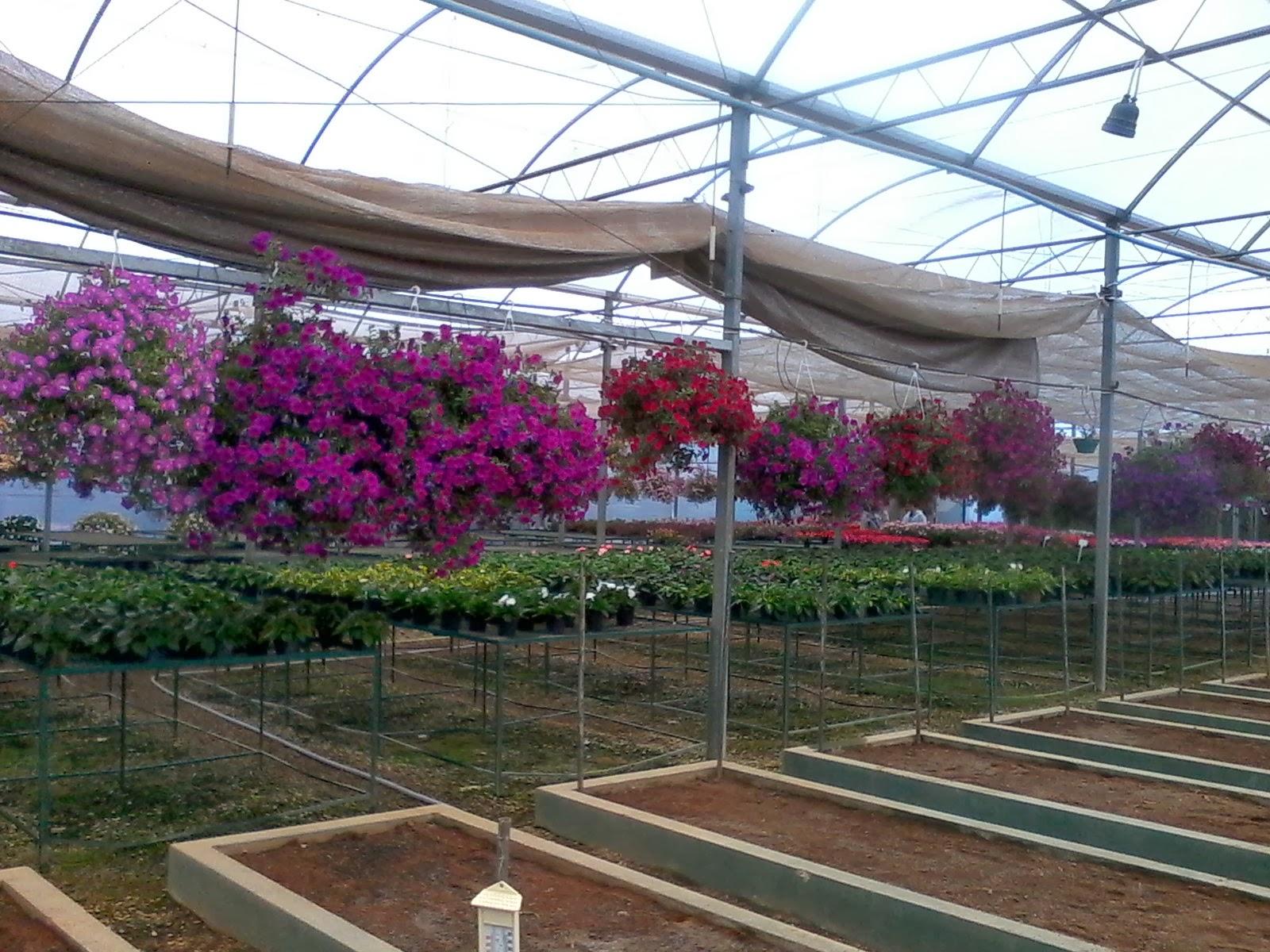 Flor De Lótus~ Flores Para Jardins Meia Sombra