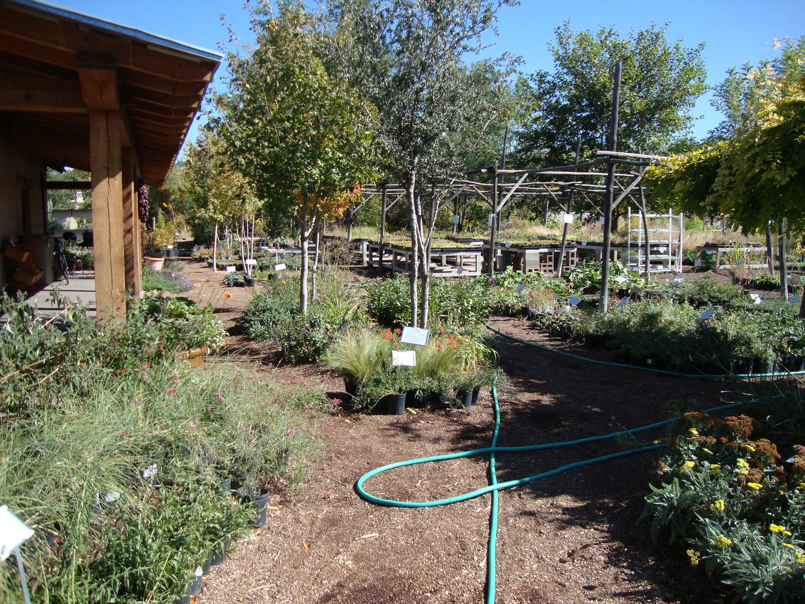 Danger Garden Plants Of The Southwest A Nursery Visit