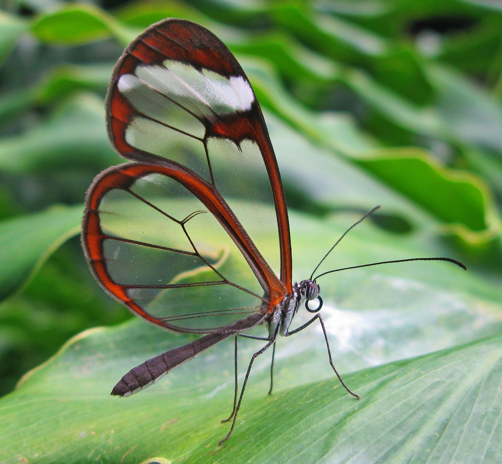 Blok888: Top 10 Most Beautiful Butterflies in the world 10 Most Beautiful Butterflies