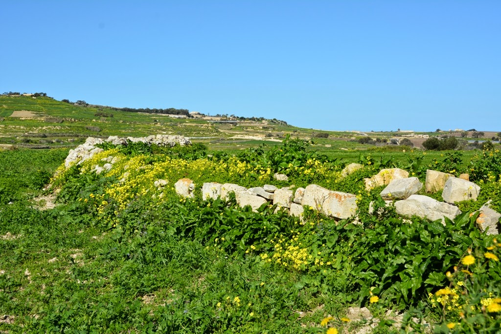 Mosta country side