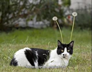 Foto kucing lucu dengan antena