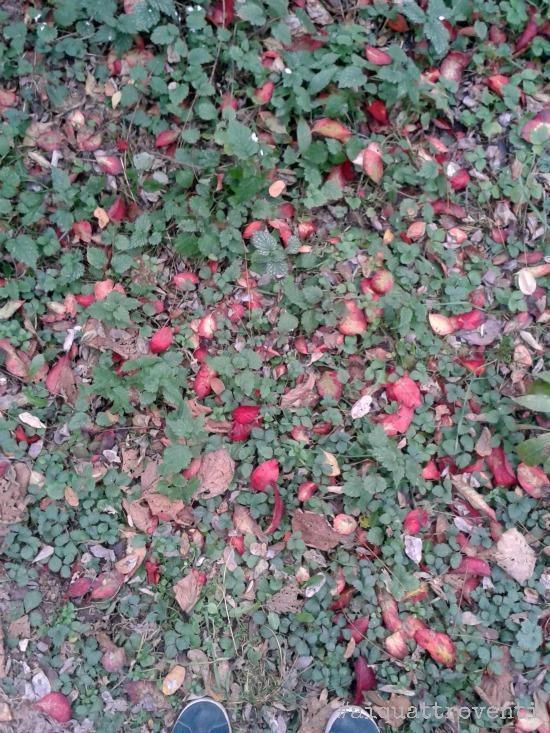 aiquattroventi-autunno-foglie
