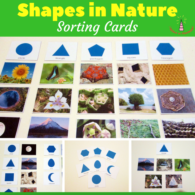 Shapes in Nature Sorting Cards