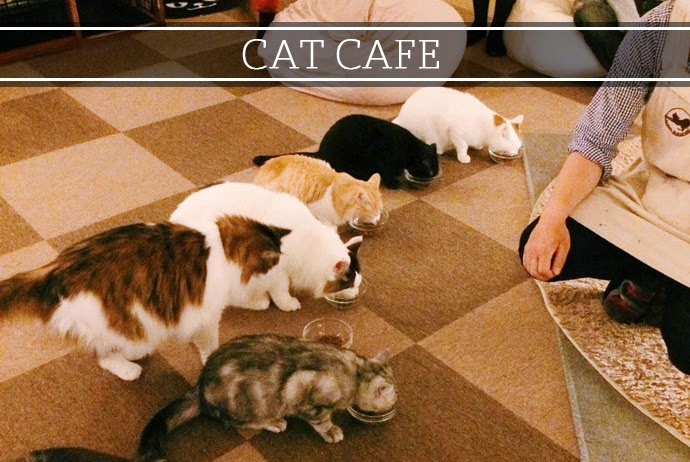 japan cat cafe, adventure