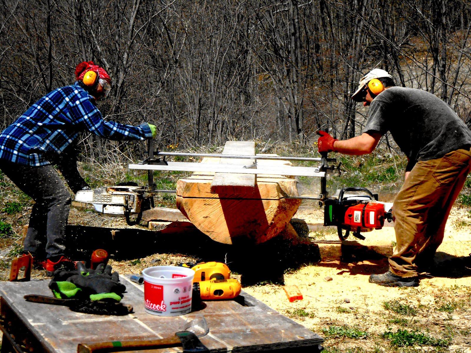 Préparation : coupe des troncs d'arbre