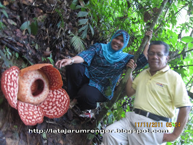 Mohd Hassan Tuah
